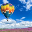Colorful hot air balloon over pink flower fields with blue sky background — Foto Stock #35744209