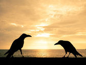 Silhouette crows at sunset — Foto de Stock