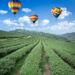 Hot air balloon over Tea plantation with blue sky background — Stock Photo #49101875