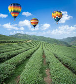 Hot air balloon over Tea plantation with blue sky background — Stock Photo