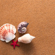 SeShells On Sand — Stock Photo #12336156