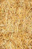 Altın saman — Stok fotoğraf