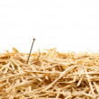 Needle in a haystack — Stock Photo #12360978