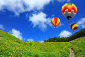 Hot air balloon on Yellow flower field Tung Bua Tong (Mexican su — Stock Photo