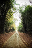 Rural road in bamboo forest — Stock Photo