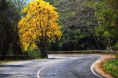 Strada e l'albero d'oro — Foto Stock