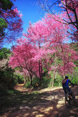 Bike riding in a wonderful nature — 图库照片