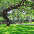 Beautiful big tree on green grass — Stock Photo #28136679