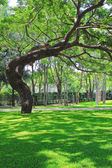 Beautiful big tree on green grass — Stock Photo