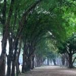 Bela maneira de floresta — Foto Stock