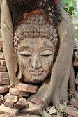 Head of buddha — Stock Photo