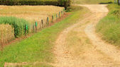 Country road in wheat field — Stock Photo