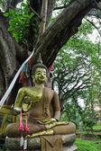 Buddha under bodhi trädet. — Stockfoto