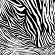 Zebra texture fabric style. — Stock Photo #28155789