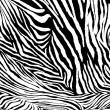 Zebra texture fabric style. — Stock Photo