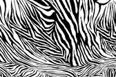 Zebra texture fabric style. — Stock Photo