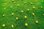 Blommor i gräset. — Stockfoto