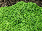 Green Moss on the ground — Stock Photo