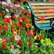 Stock Photo: Vintage Bench in tulips garden