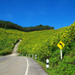 Stock Photo: Mountain of mexicsunflower and road