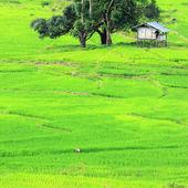 Campo de arroz em terraços verdes em chiang mai, tailândia — Foto Stock