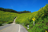 Mountain of mexican sunflower and road — Stock fotografie