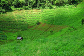 Agricultural field on hill — Foto Stock