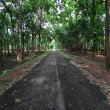 Road in the forest — Stock Photo #28771291