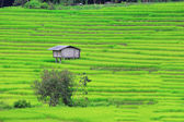Terraced rice fields in northern Thailand — Stock Photo
