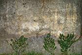 Détail des vieux murs ont arbre — Photo