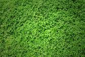 Green Moss texture — Stock Photo