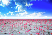 Water lilly on the lake and beautiful sky — Stock Photo