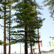 Manly Beach 5 — Stock Photo