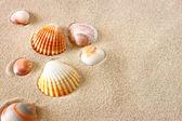 Sea shells on sand at the beach — Stock Photo