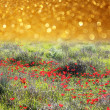 Dreamy abstract poppy field with glitter lights background — Stock Photo