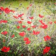 Photo of a poppies pasted on a grunge background — Stock Photo #29283913