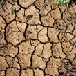Dry land or Cracked ground background — Stock Photo