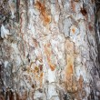 Stock Photo: Rough cracked textured oak bark background closeup