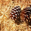 Two pine cones on the ground — Stock Photo