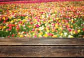 Field of colorfull flowers — Stock Photo