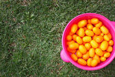 Cumquat or kumquat oranges picked from garden tree in piled colorful bowl. spring or summer concept background. — Stock Photo