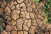 Dry land or Cracked ground background — Stock Photo