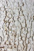кора дерева сосны ствола текстуры окрашены в белый фон — Стоковое фото