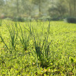 Stock Photo: Long grass meadow