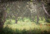 Bloem veld grunge achtergrond — Stockfoto
