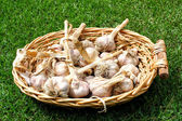 Close up of garlic in basket — Stock Photo
