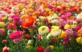 Flowers in field — Stock Photo