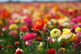 Close up fo flower in field — Stock Photo