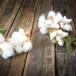 Stock Photo: Cotton