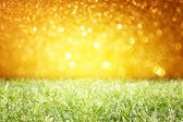 Grass with saturated lights — Stock Photo